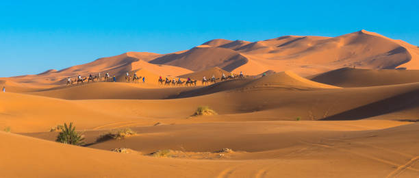 Caravan of camels at the Erg Chebbi dunes in the Sahara stock photo
