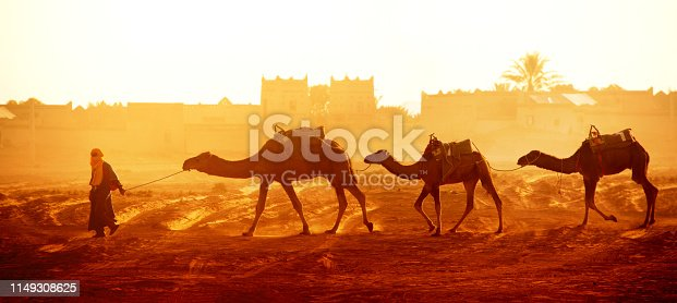 Horizontal banner with caravan of camels in Sahara desert, Morocco. Driver-berber with three camels dromedary on sunrise sky background and traditional moroccan houses