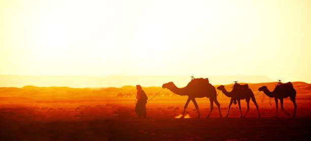 kamelkarawane in der wüste sahara, marokko - urlaub in tunesien stock-fotos und bilder
