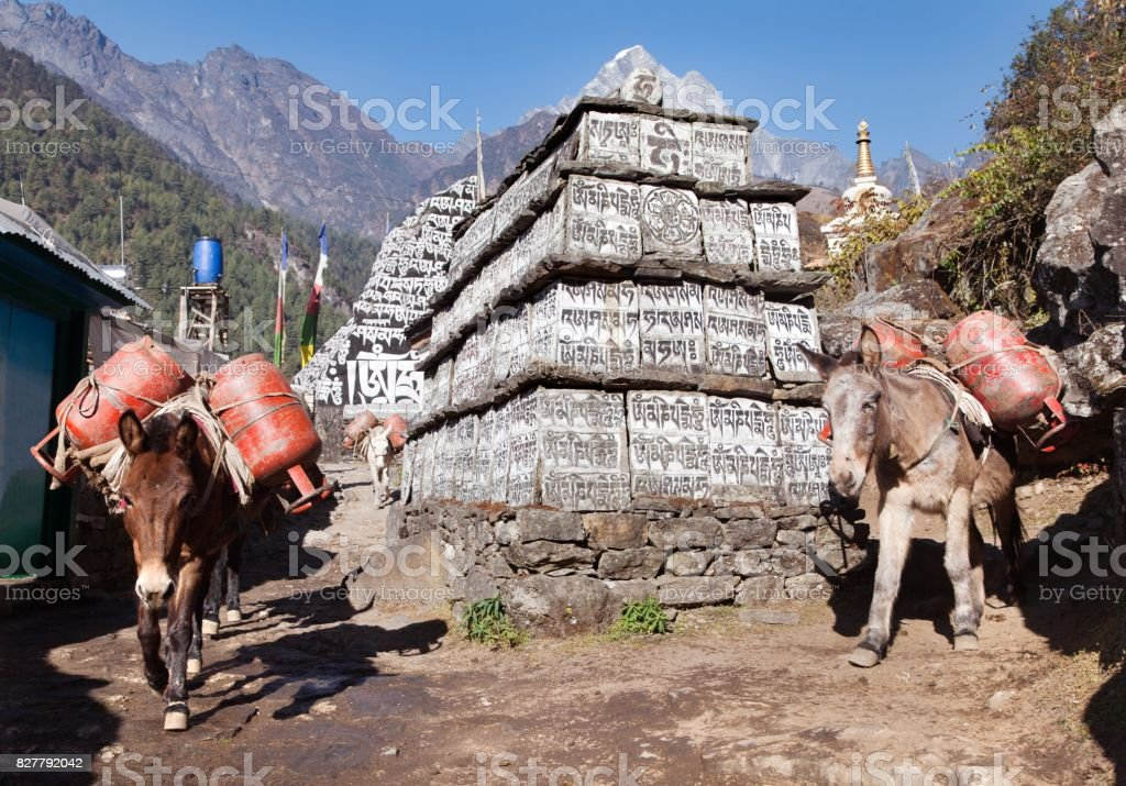Caravan of mules with gas cylinders stock photo