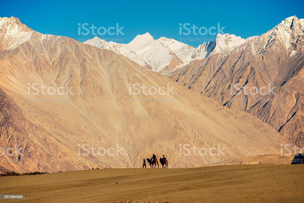 caravan travellers riding camels Nubra Valley stock photo