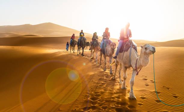 karawanenwandern in der wüste merzouga - sahara stock-fotos und bilder