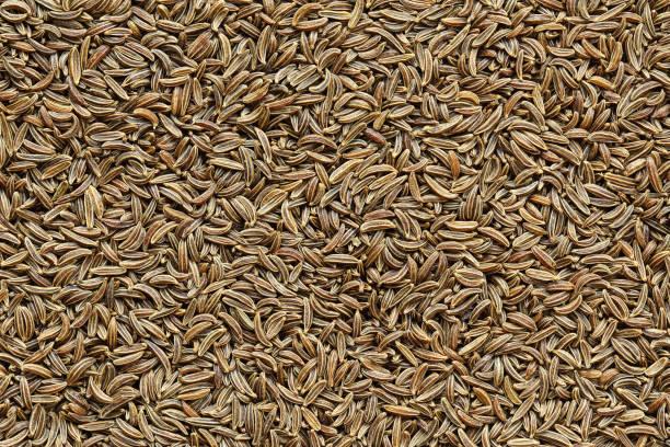 textura de fundo closeup de sementes de alcaravia - foto de acervo