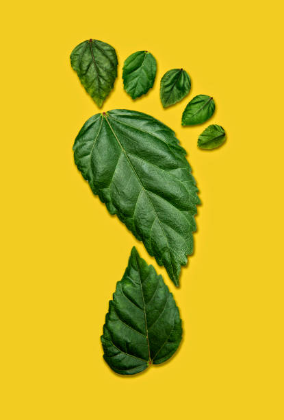 Carbon Footprint on Yellow Background stock photo