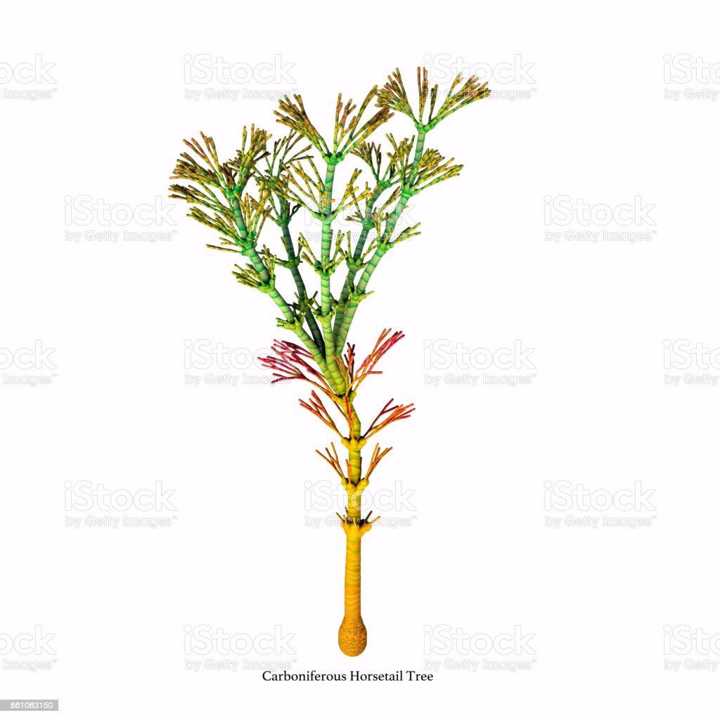 Carboniferous Horsetail Tree stock photo