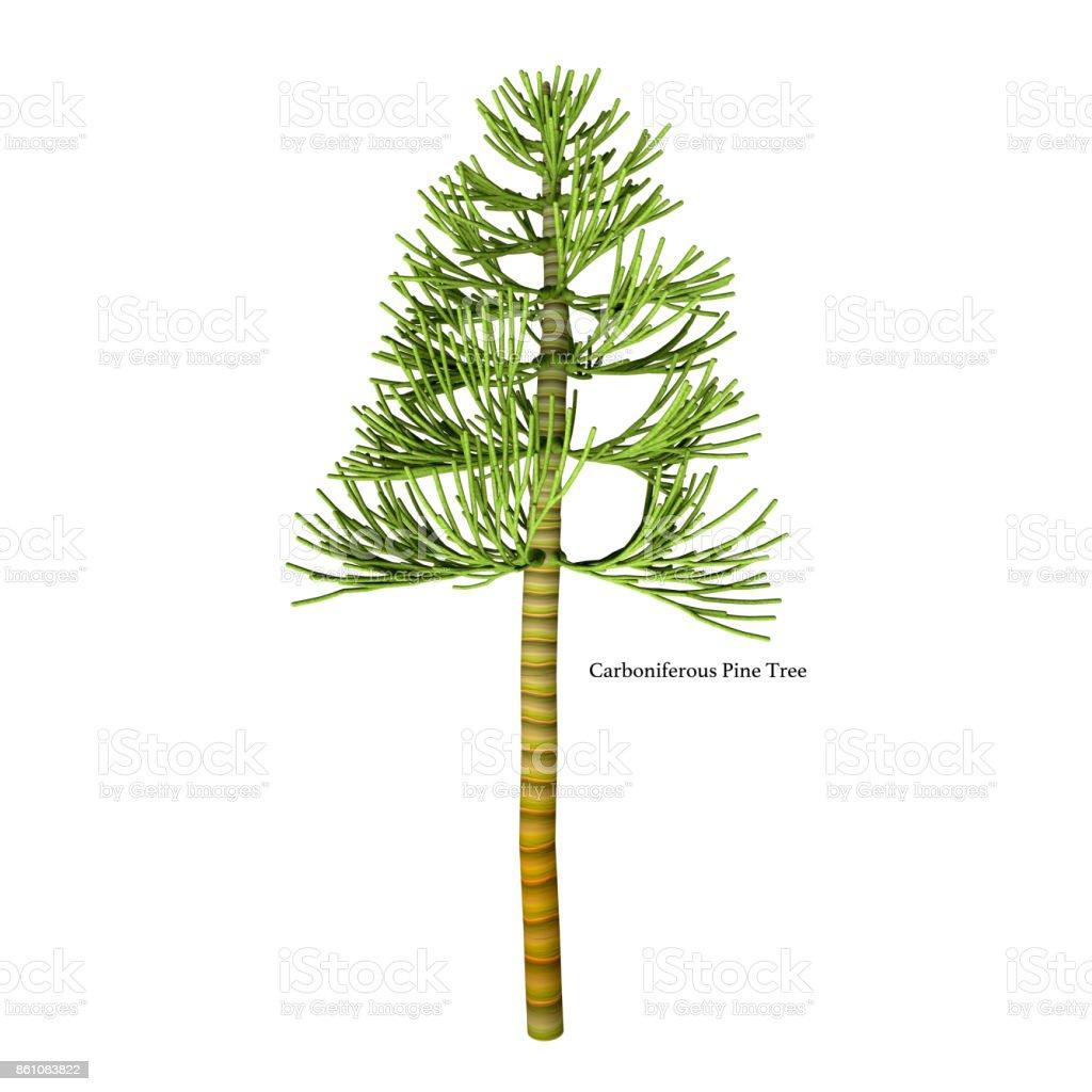 Carboniferous Pine Tree stock photo