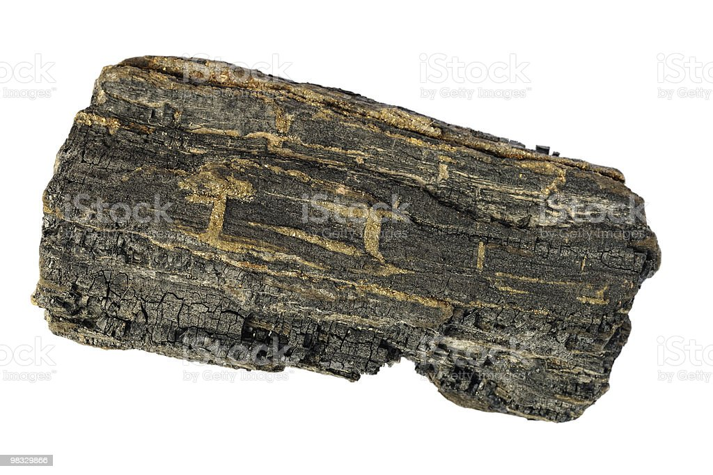 Carbonized wood from Isle of Wight stock photo