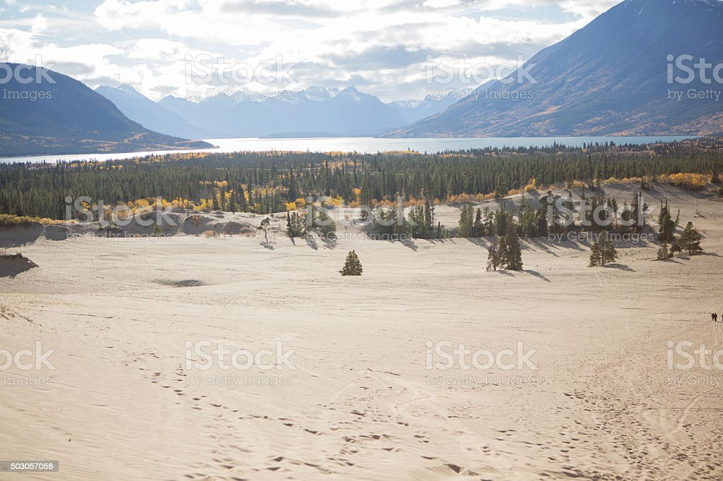 Carcross desert in Yukon, Canada. stock photo