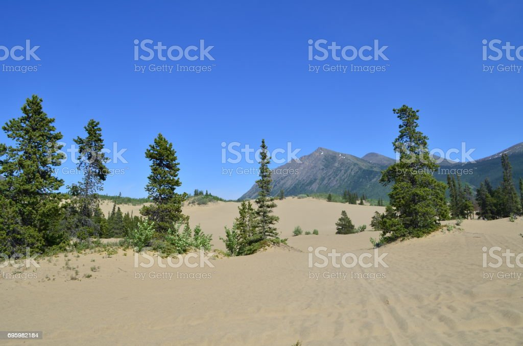 Carcross desert in Yukon stock photo