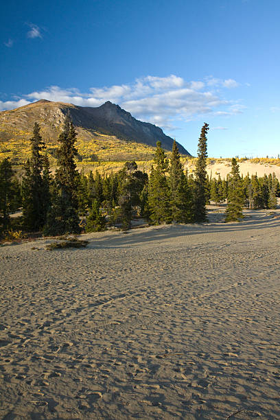 carcross desert, smallest desert in canada, yukon - yt stock pictures, royalty-free photos & images