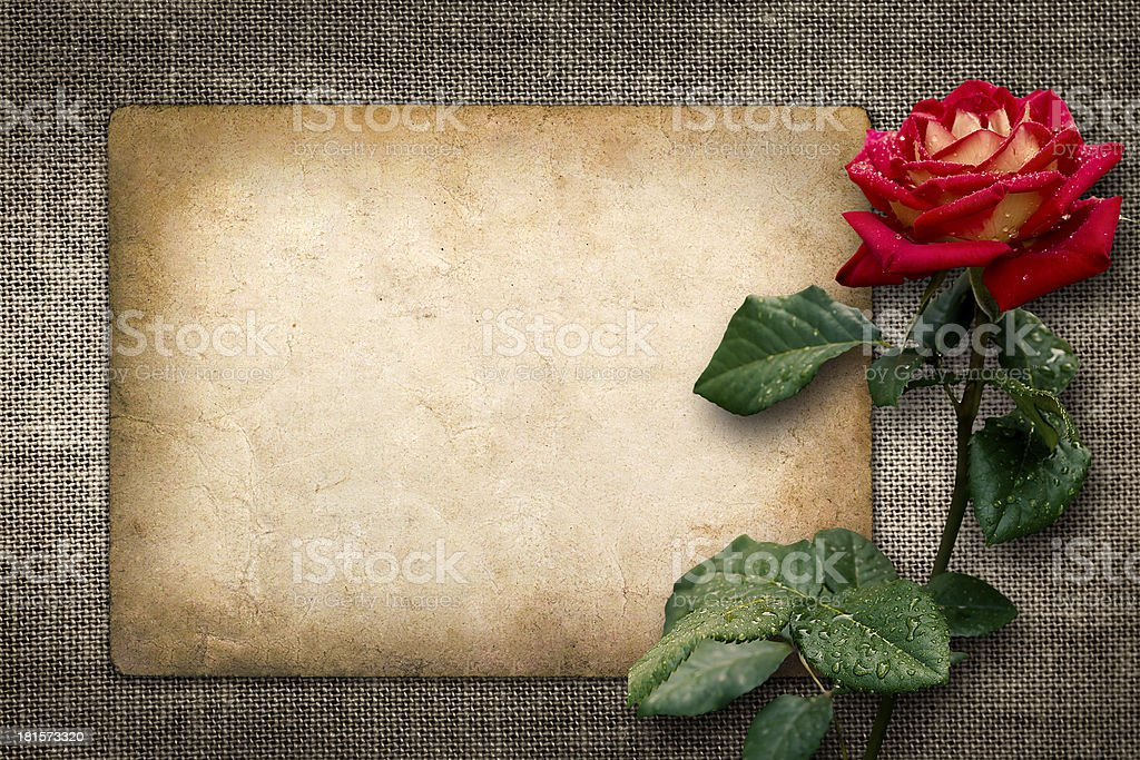 Card for invitation or congratulation with red rose royalty-free stock photo