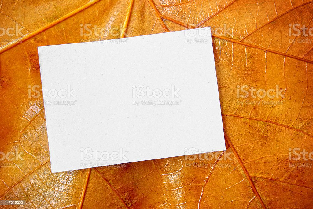 Card on Leaf royalty-free stock photo