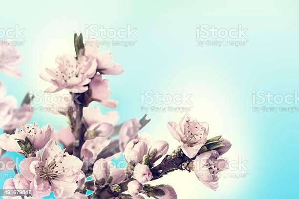 Card with peach flowers picture id491679847?b=1&k=6&m=491679847&s=612x612&h=gtc2d0ohrcabxmqjkyouxdmdbxcoaszkha avycd oi=