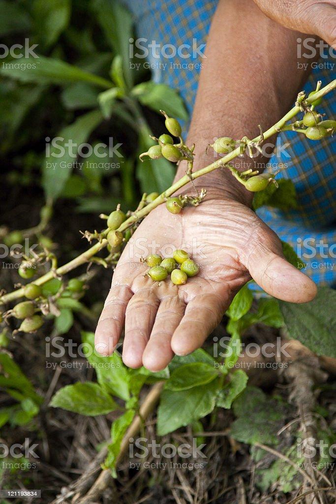 Cardamom seeds royalty-free stock photo