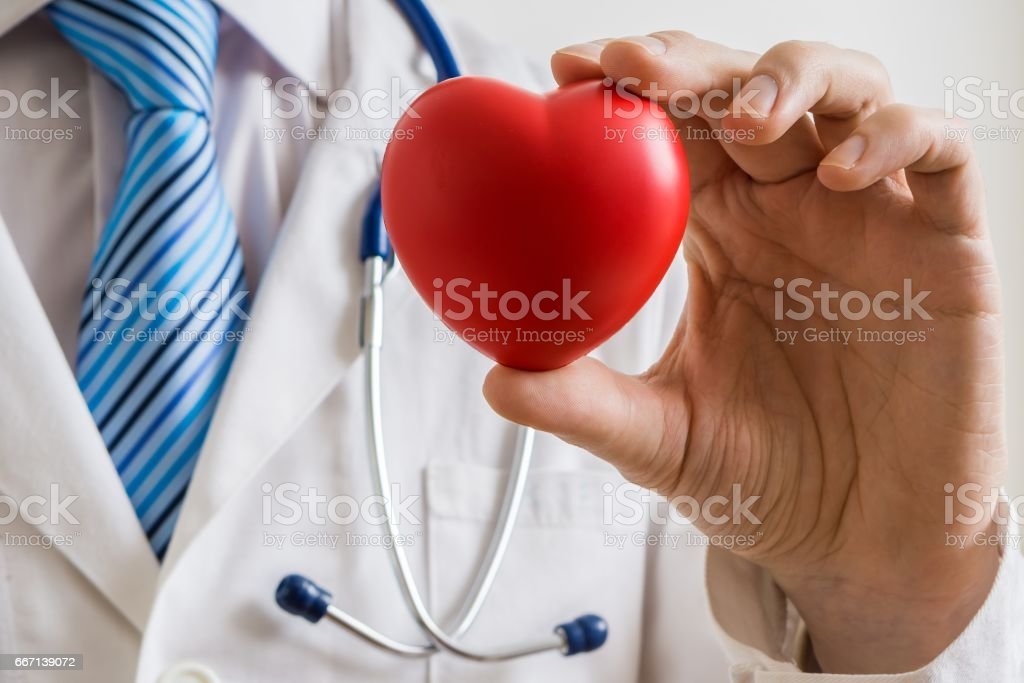 Cardiologist doctor holds red heart in hand. stock photo