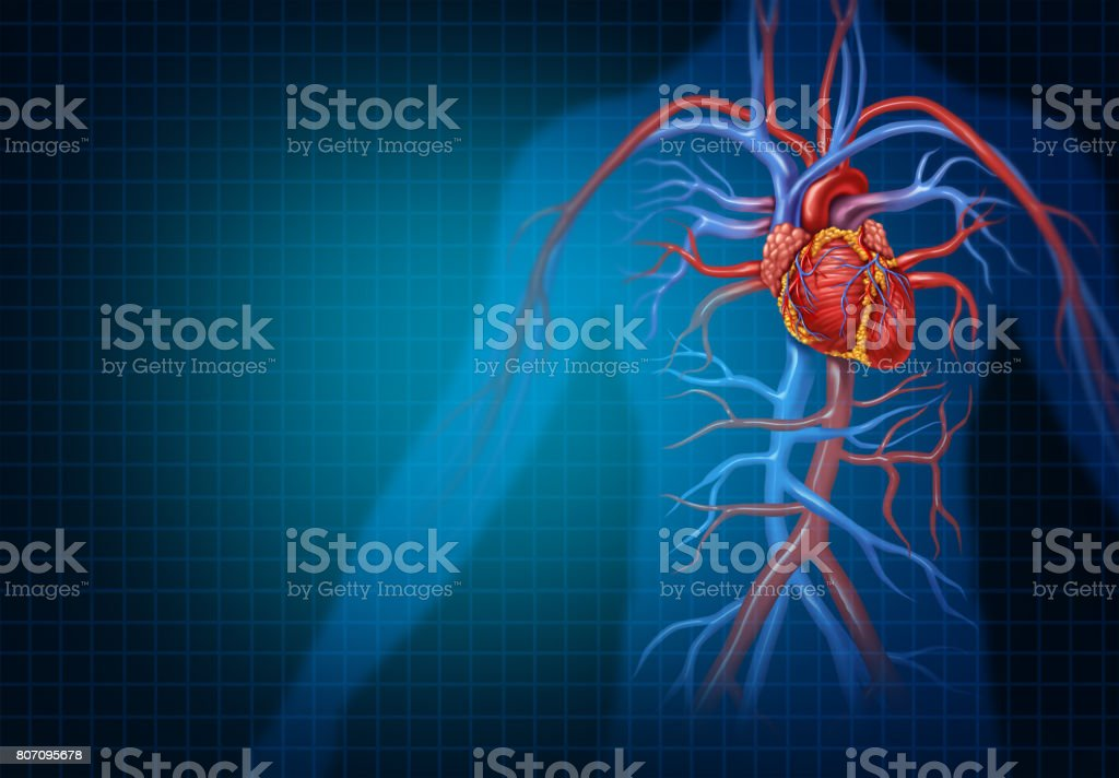 Cardiology And Cardiovascular Heart Concept stock photo