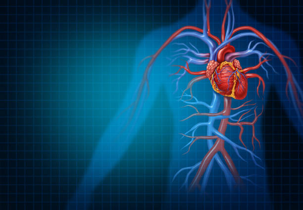 cardiology and cardiovascular heart concept - biomedical illustration stock pictures, royalty-free photos & images