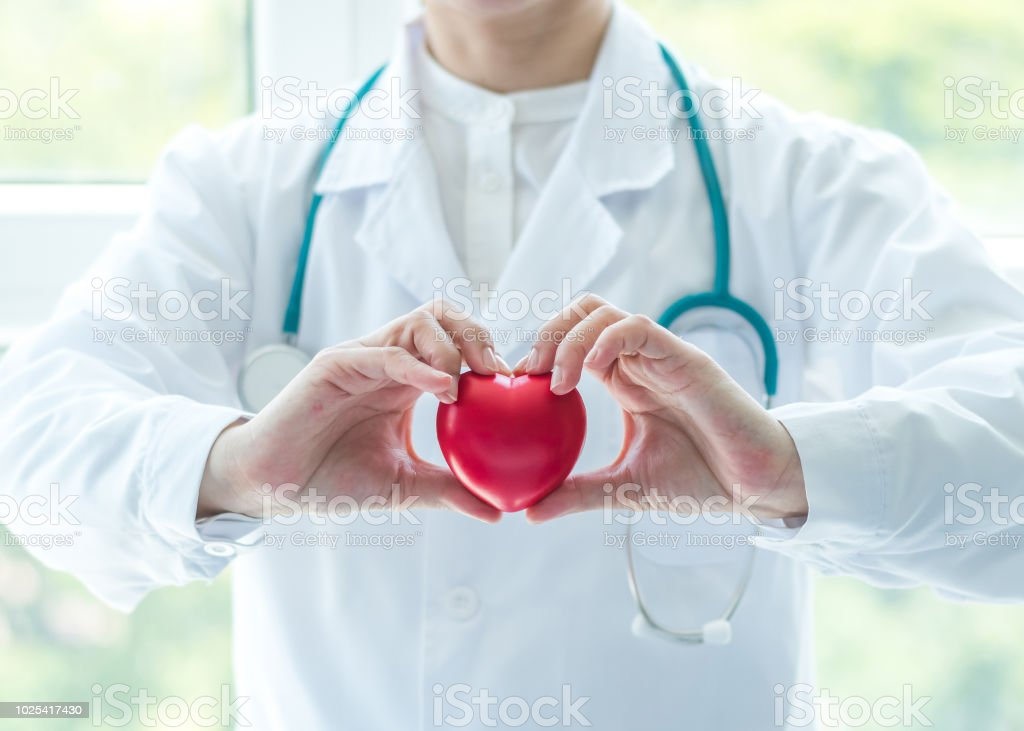 Cardiovascular disease doctor or cardiologist holding red heart in clinic or hospital exam room office for professional medical and cardiology health care service and world heart health day concept stock photo