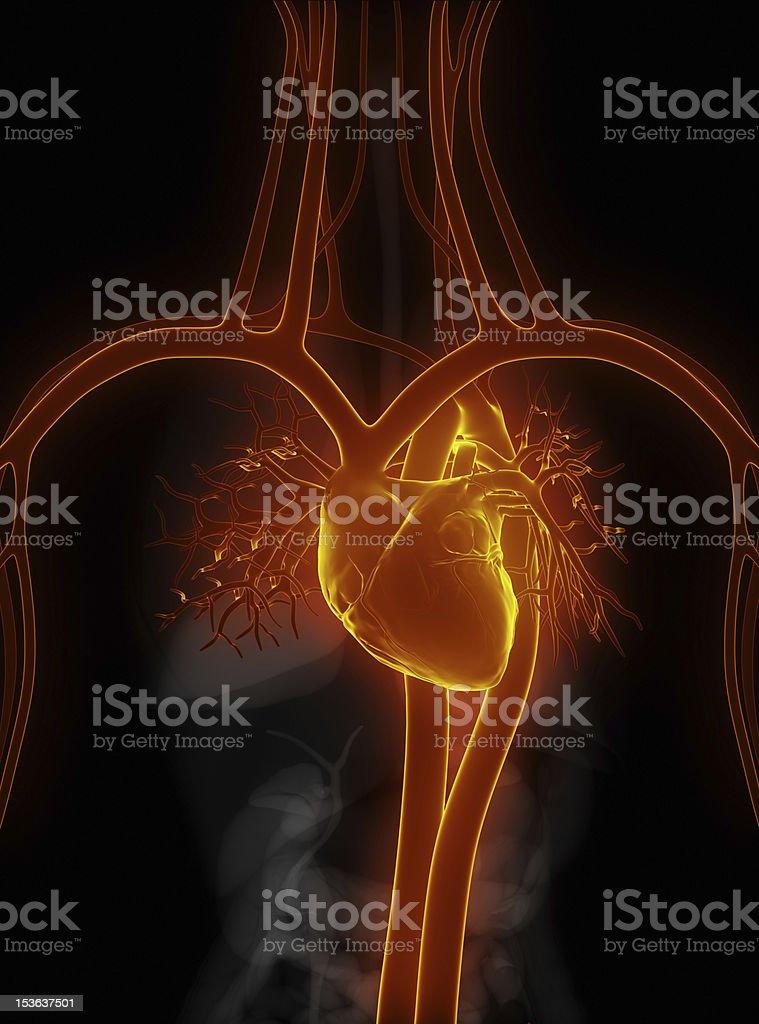 Cardiovascular system in black stock photo