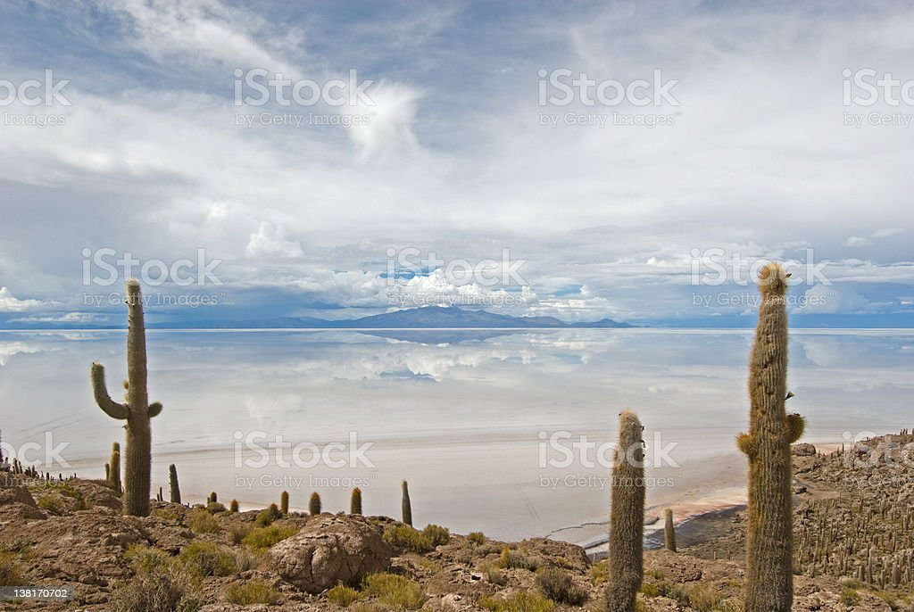 Cardon cactus at Isla de Pescado, bolivia royalty-free stock photo