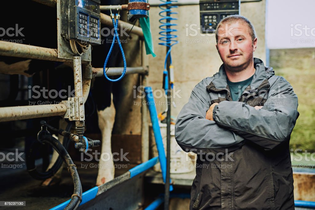 I care about my cattle stock photo