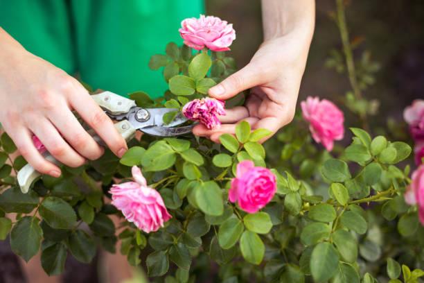 pflege den garten - blütenstand stock-fotos und bilder