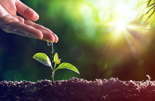 Care Of New Life Baby Plant 照片檔及更多 人手 照片