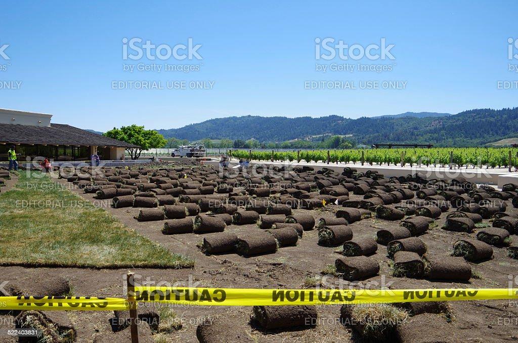 Cuidado del Prado foto de stock libre de derechos