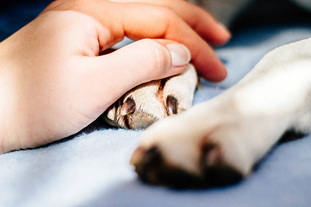 Care Human hand holding dog paw animal hand stock pictures, royalty-free photos & images