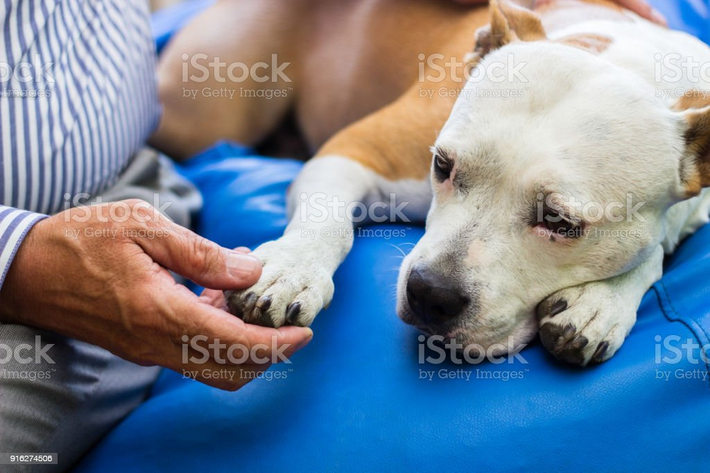 Care Dog paw and human hand are doing handshake A Helping Hand Stock Photo