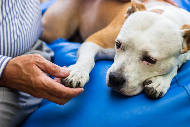Care Dog paw and human hand are doing handshake one senior man only stock pictures, royalty-free photos & images