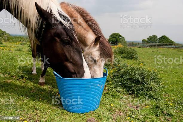 Care share and be fairtwo horses sharing same bucket picture id136484208?b=1&k=6&m=136484208&s=612x612&h=kwrtyteofbyd9oz0fzobjc4gljhuopeysmrqve i0xy=