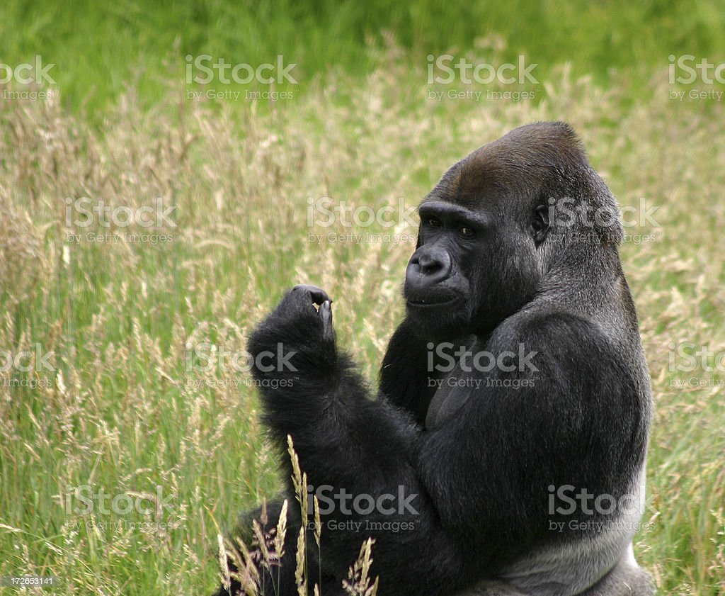 Care to arm wrestle? royalty-free stock photo