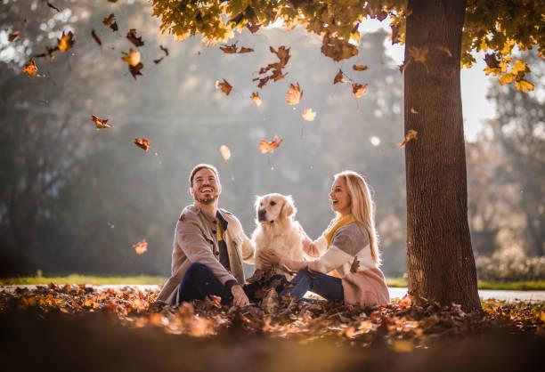 Carefree couple and their dog among autumn leaves in the park picture id941750054?b=1&k=6&m=941750054&s=612x612&w=0&h=pl3fphaldodhtbhwmlefv6mc3pix01tpheknkt1al88=