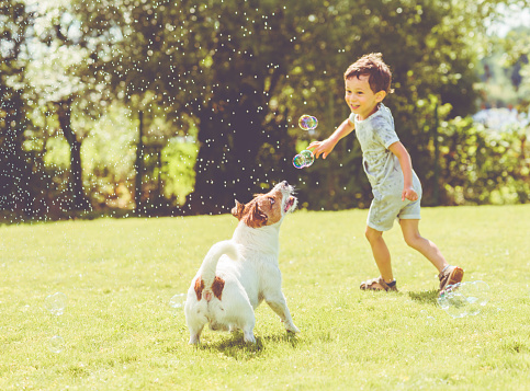 Carefree kid and pet dog playing with flying soap bubbles at sunny summer day