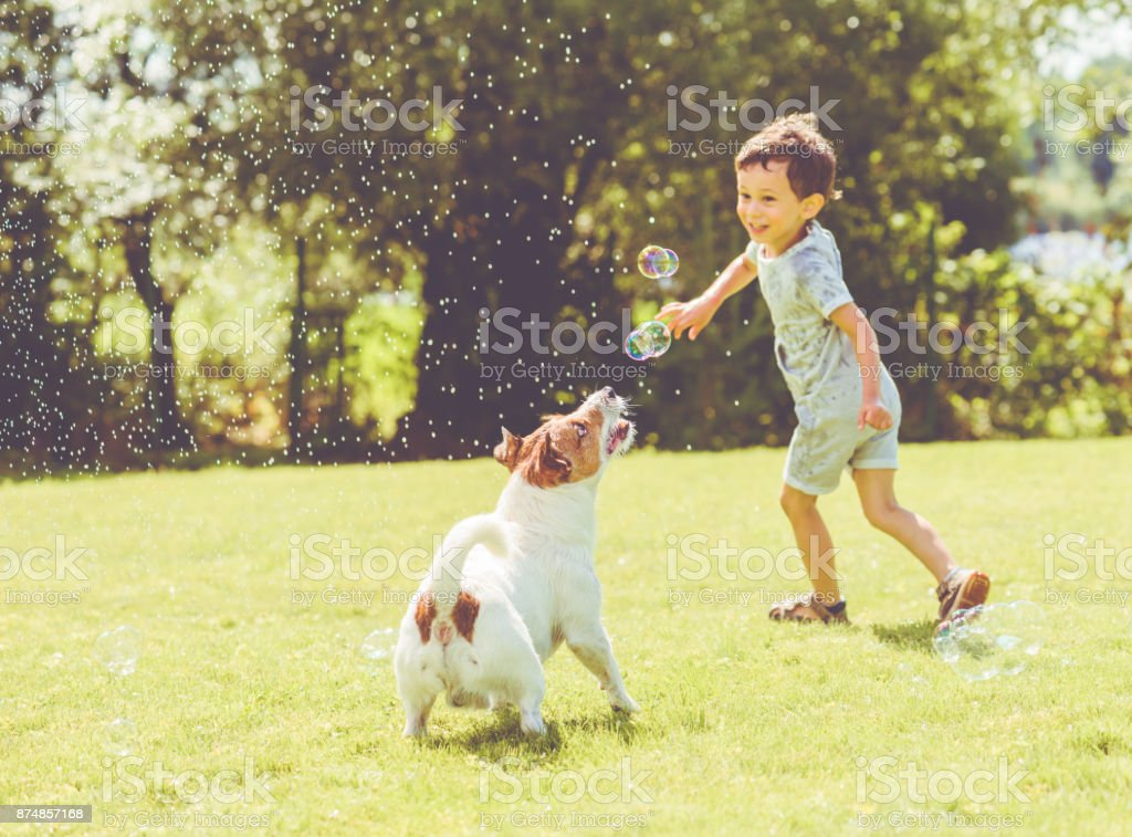 Carefree kid and pet dog playing with flying soap bubbles at sunny summer day stock photo