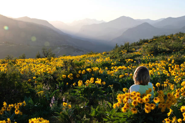 Carefree woman lying on meadow with sun flowers  enjoying sunrise over mountains  and relaxing. stock photo