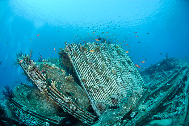 cargo from shipwreck - artificial reef stock pictures, royalty-free photos & images