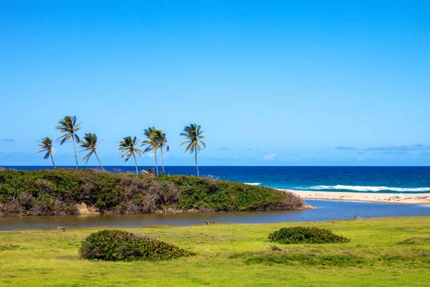 Caribbean beach - Barbados stock photo