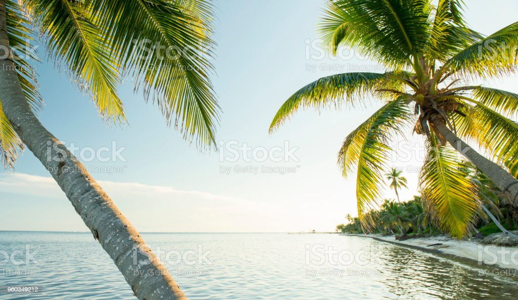 Caribbean Beach Belize stock photo