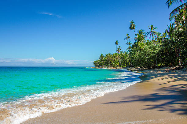Caribbean beach close to Puerto Viejo - Costa Rica Wild beautiful beach in the caribbean of Costa Rica -  close to Puerto Viejo, Manzanillo, Cocles limoen stock pictures, royalty-free photos & images