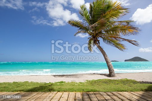 Palm tree, golden sand turquoise water in the Caribbean Sea