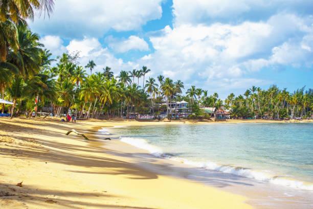 caribbean beach - pirania zdjęcia i obrazy z banku zdjęć