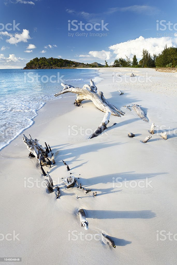 Caribbean Beach With Driftwood royalty-free stock photo