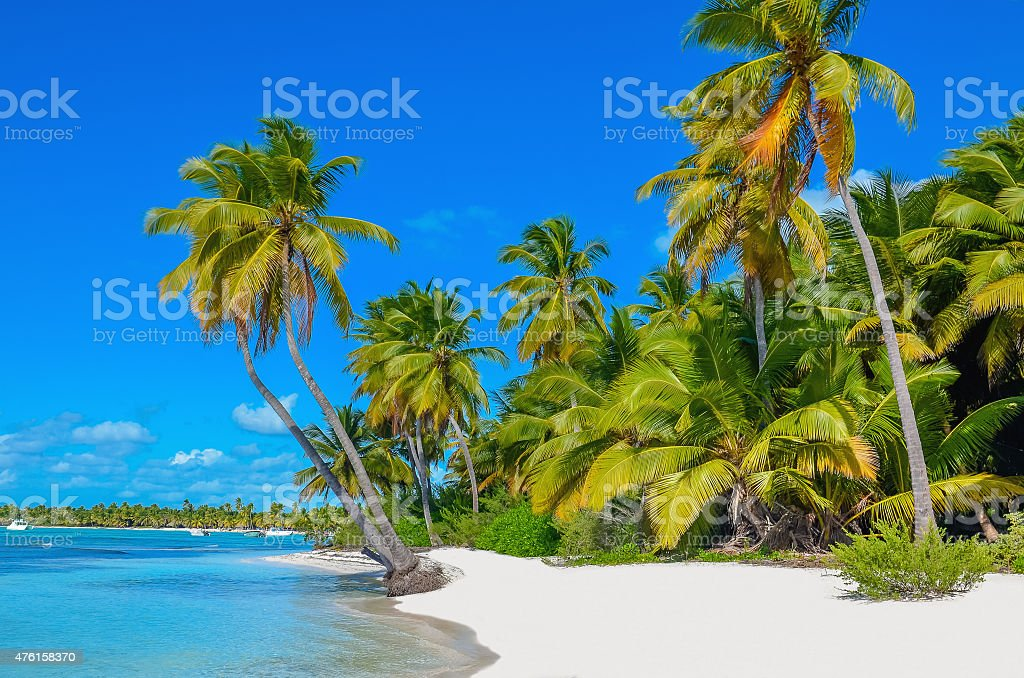 Caribbean beach with white sand and palm trees stock photo