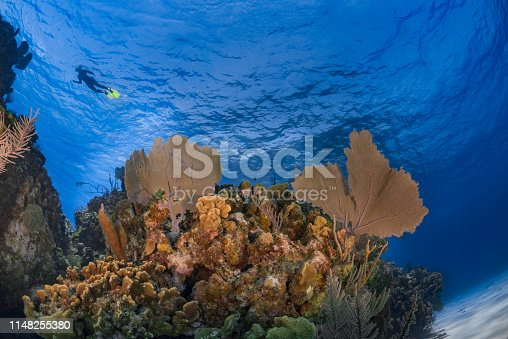 View of the Caribbean coral reef and diver in Little Cayman - Cayman Islands