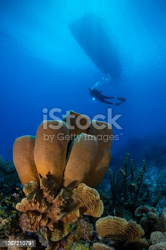 Caribbean coral reef and diver in Cayman Brac - Cayman Islands