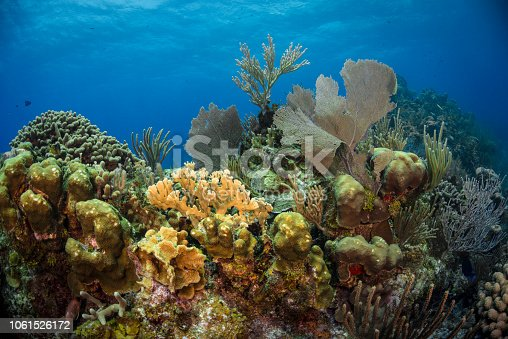 View of the stunning marine life in Little Cayman Island, Cayman Islands