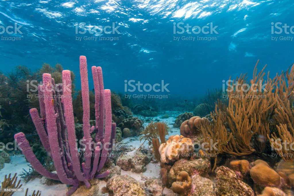 Caribe coral reef - foto de stock
