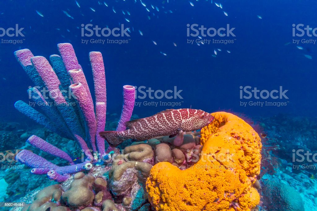 Caribbean coral reef stock photo